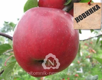 Яблоня Делело фото